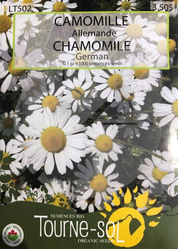 Camomille Allemande / German Chamomilia  - Pépinière