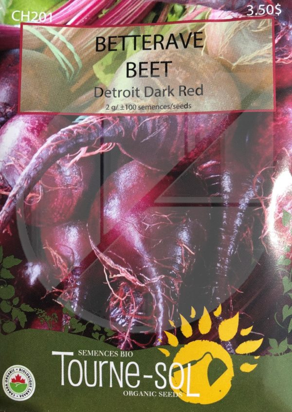 Betterave 'Detroit Dark Red' / 'Detroit Dark Red' Beet - Pépinière