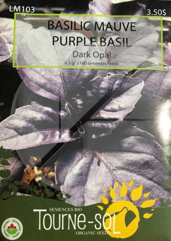Basilic Mauve 'Dark Opal' / Dark Opal' Purple Basil - Pépinière