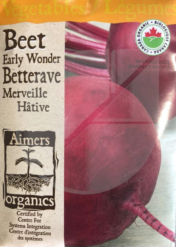 Betterave 'Merveille Hâtive' / 'Early Wonder' Beet  - Pépinière