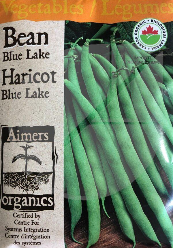 Haricot 'Blue Lake' / 'Blue Lake' Bean - Pépinière