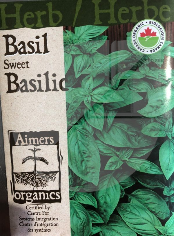 Basilic / Basil Sweet - Pépinière