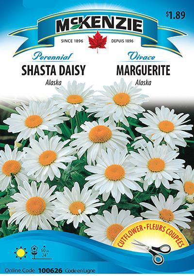 Marguerite 'Alaska' / 'Alaska' Shasta Daisy - Pépinière