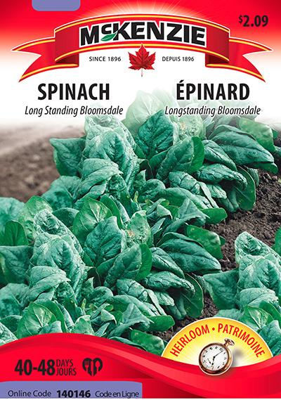 Épinard 'Long Standing Bloomsdale' / 'Long Standing Bloomsdale' Spinach - Pépinière