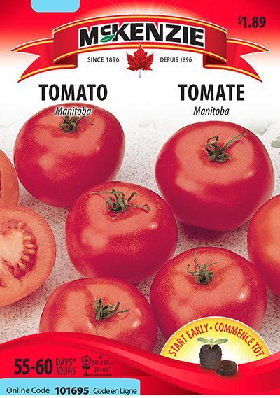 Tomate 'Manitoba' / 'Manitoba' Tomato - Pépinière