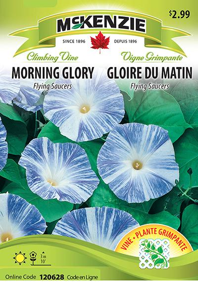 Gloire du Matin 'Flying Saucers' / 'Flying Saucers' Morning Glory - Pépinière