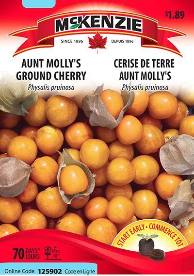 Cerise de Terre 'Aunt Molly's' / 'Aunt's Molly' Ground Cherry  - Pépinière