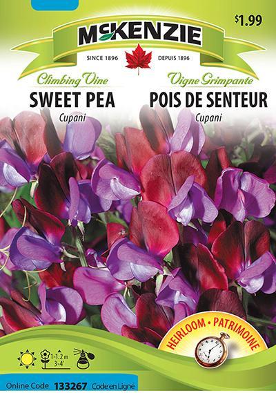 Pois de Senteur 'Cupani' / 'Cupani' Sweet Pea - Pépinière