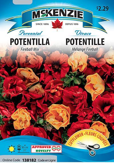 Potentille Mélange 'Fireball' / Potentilla 'Fireball' Mix - Pépinière