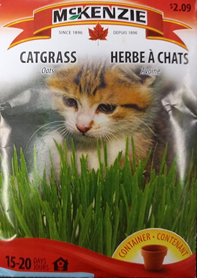 Herbe à Chat / Catnip - Pépinière