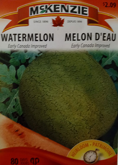 Melon d'Eau 'Early Canada Improved' / 'Early Canada Improved' Watermelon  - Pépinière