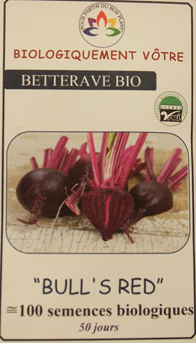 Betterave 'Bull's Red' Bio / 'Bull's Red' Beet Bio  - Pépinière
