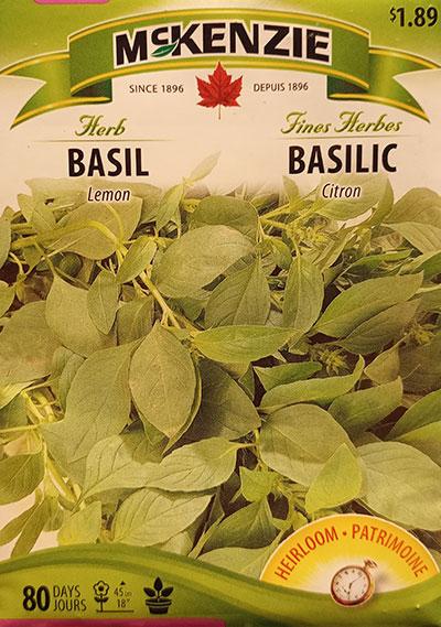 Basilic Citron / Lemon Basil  - Pépinière
