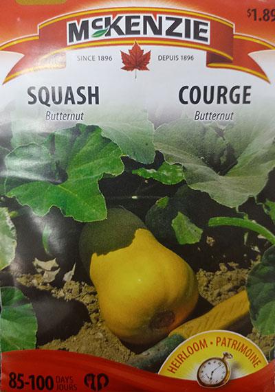 Courge Butternut / Butternut Squash  - Pépinière