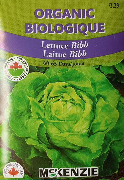 Laitue 'Bibb' Biologique / 'Bibb' Lettuce Organic  - Pépinière