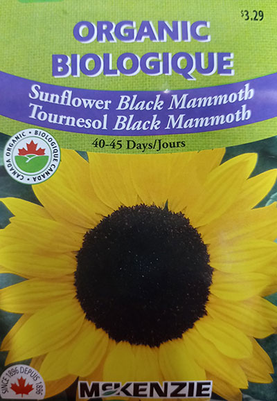 Tournesol 'Black Mammoth' Biologique / 'Black Mammoth' Sunflower Organic  - Pépinière