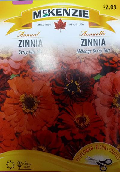 Zinnia Mélange 'Berry Tart' / Zinnia 'Berry Tart' Mix  - Pépinière