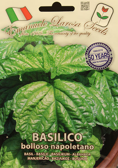 Basilic 'Bolloso Napoletano' / 'Bolloso Napoletano' Basil - Pépinière