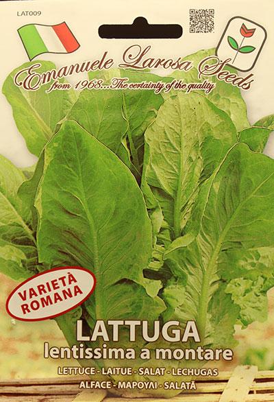 Laitue Romaine 'Lentissima Montare' / 'Lentissima Montare' Romaine Lettuce  - Pépinière