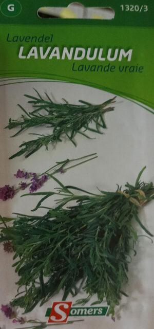 Vraie Lavande / True Lavender - Pépinière
