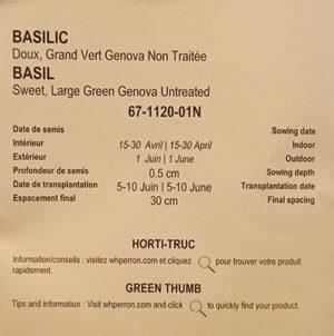 Basilic Doux de Gênes 'Grand Vert' / 'Grand Vert' Genova Sweet Basil - Pépinière